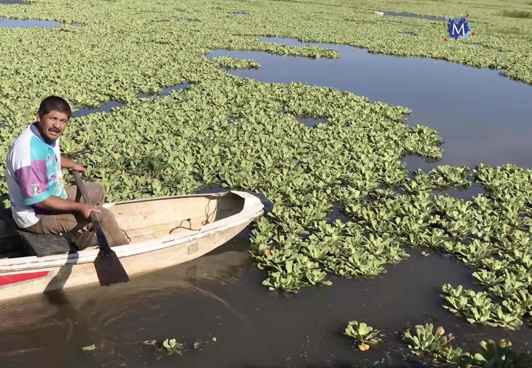 Lago Apancingo infestado